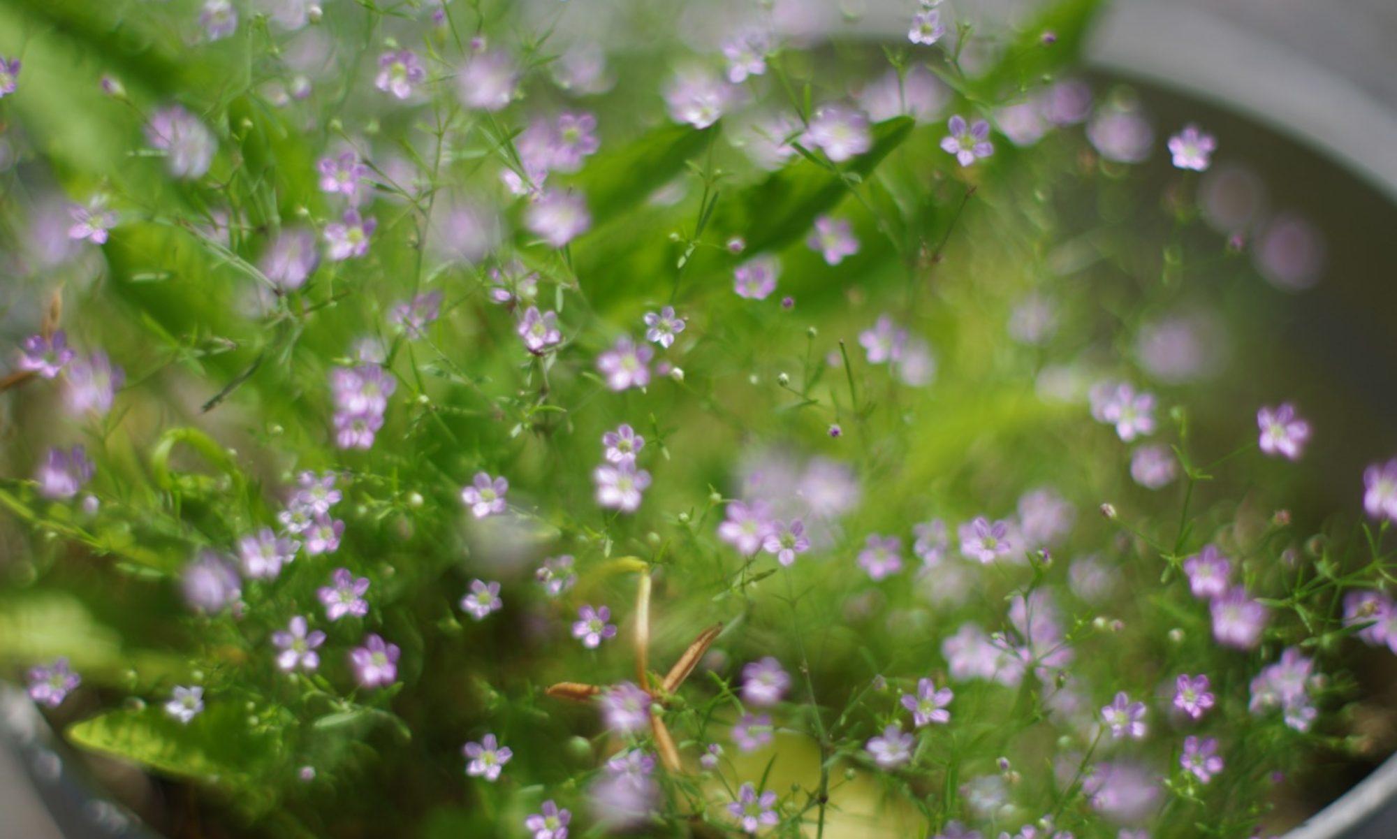 gardenclogs blog